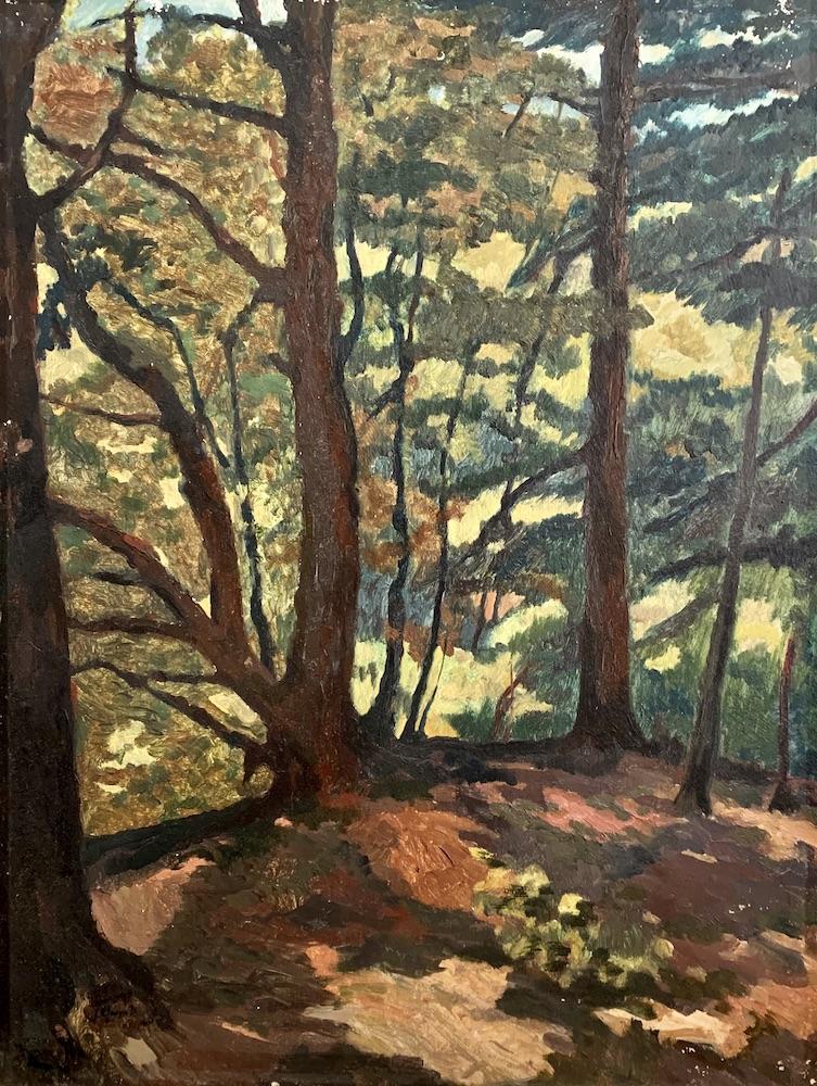 Cilgwyn Woods August 1940